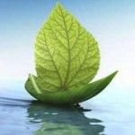 Naturopathy and Homeopathy the Difference